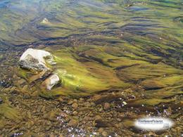 streamwithflowingalgae.19159ee99722392be22d021cd3a31cde194